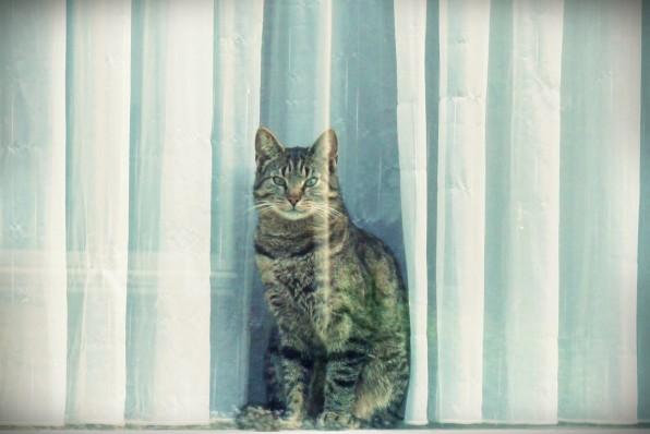 chats aux Pays Bas