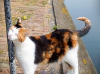 chats aux Pays Bas