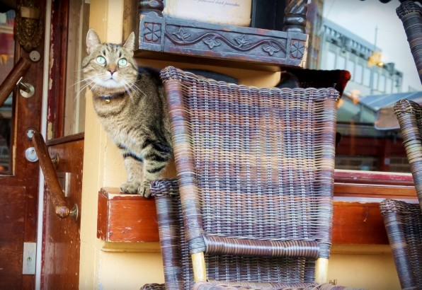 Cat Amsterdam