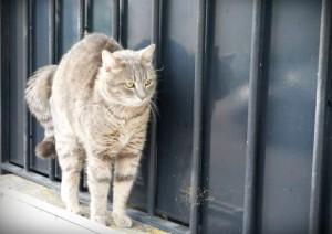 Cat Paris