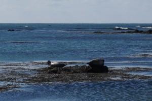 Ytritunga beach