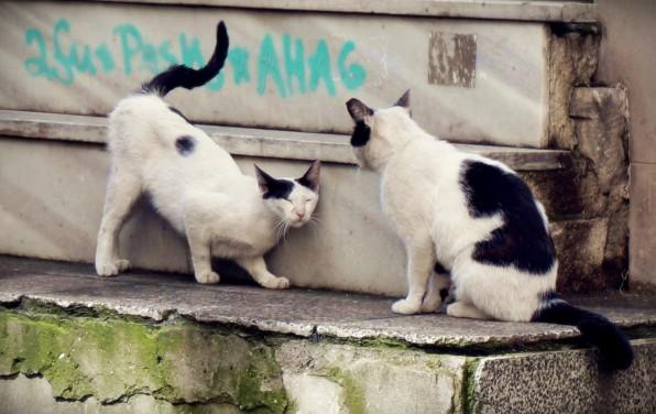 Istanbul Cat10