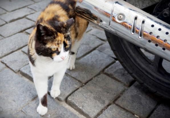 Istanbul Cat11