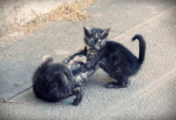 Istanbul Cat14