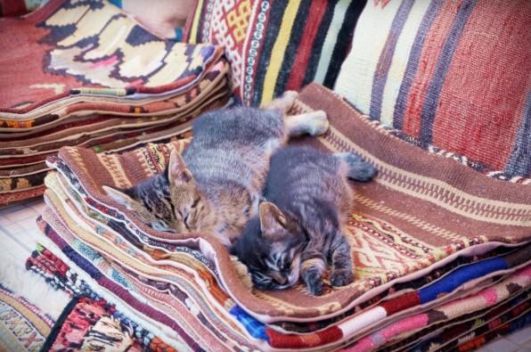 Istanbul Cat3