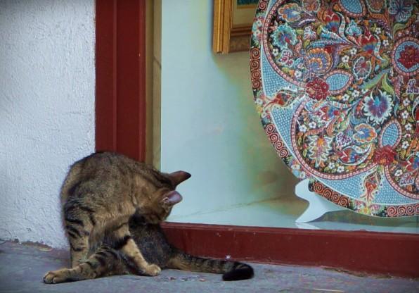 Istanbul Cat4