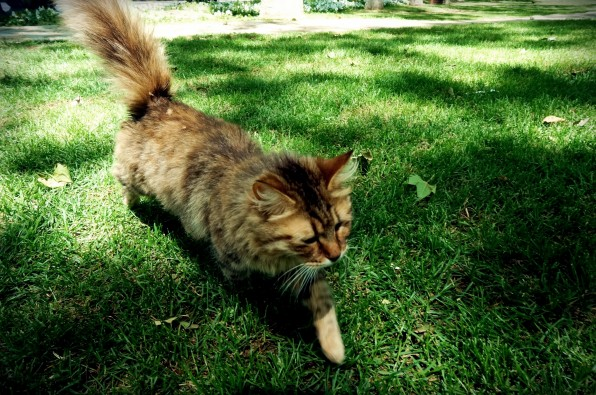 Istanbul Cat5
