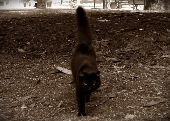 Istanbul Cat6