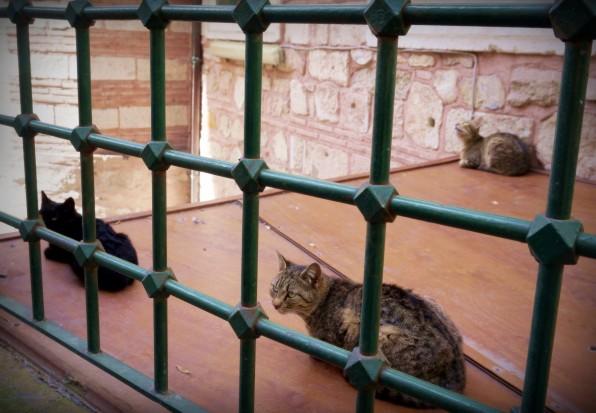 Istanbul Cat7