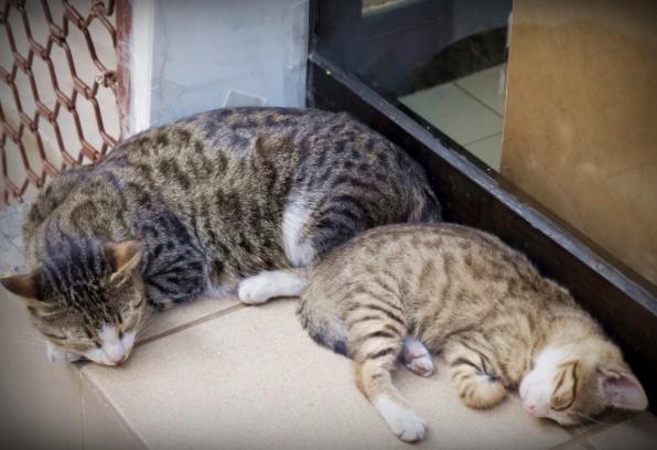 Istanbul Cat8